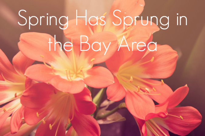 Spring-Has-Sprung-in-the-Bay-Area