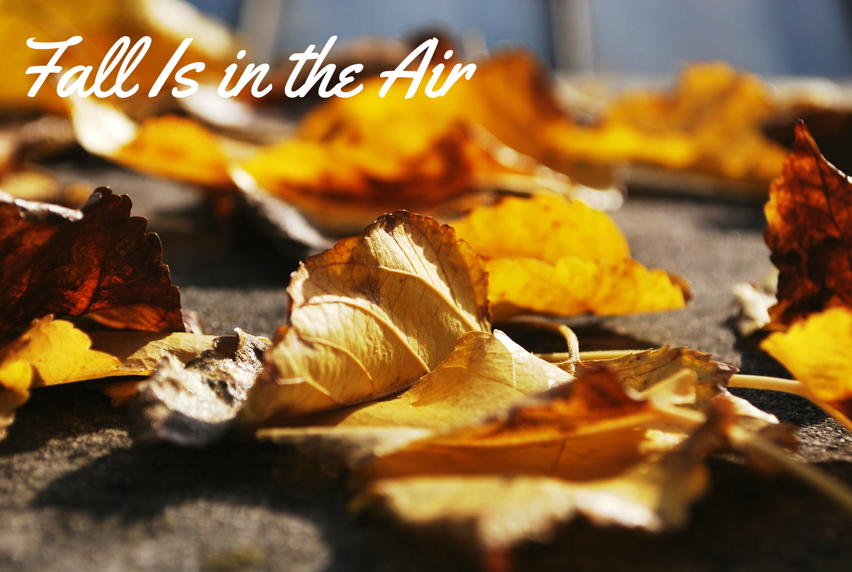 Fall Is In the Air
