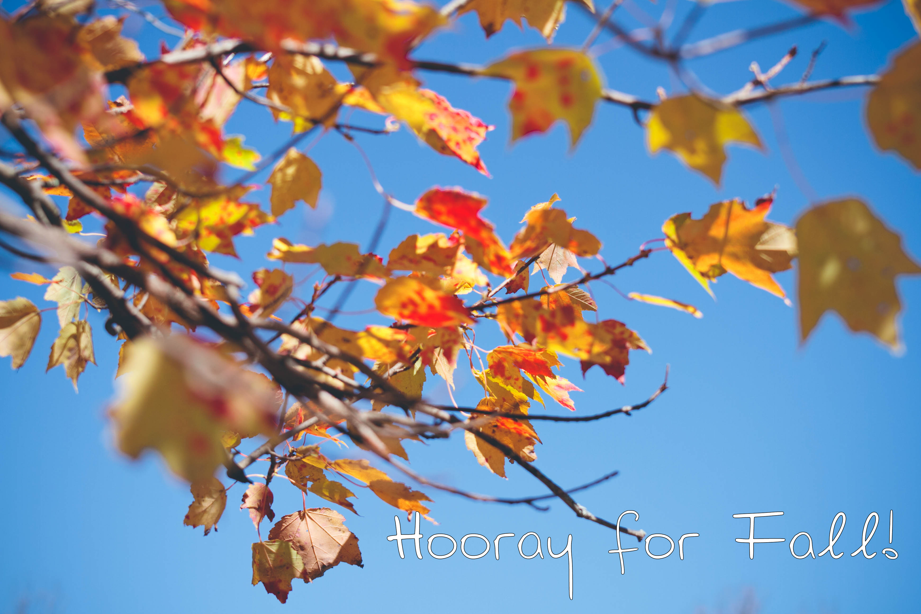 Hooray for Fall