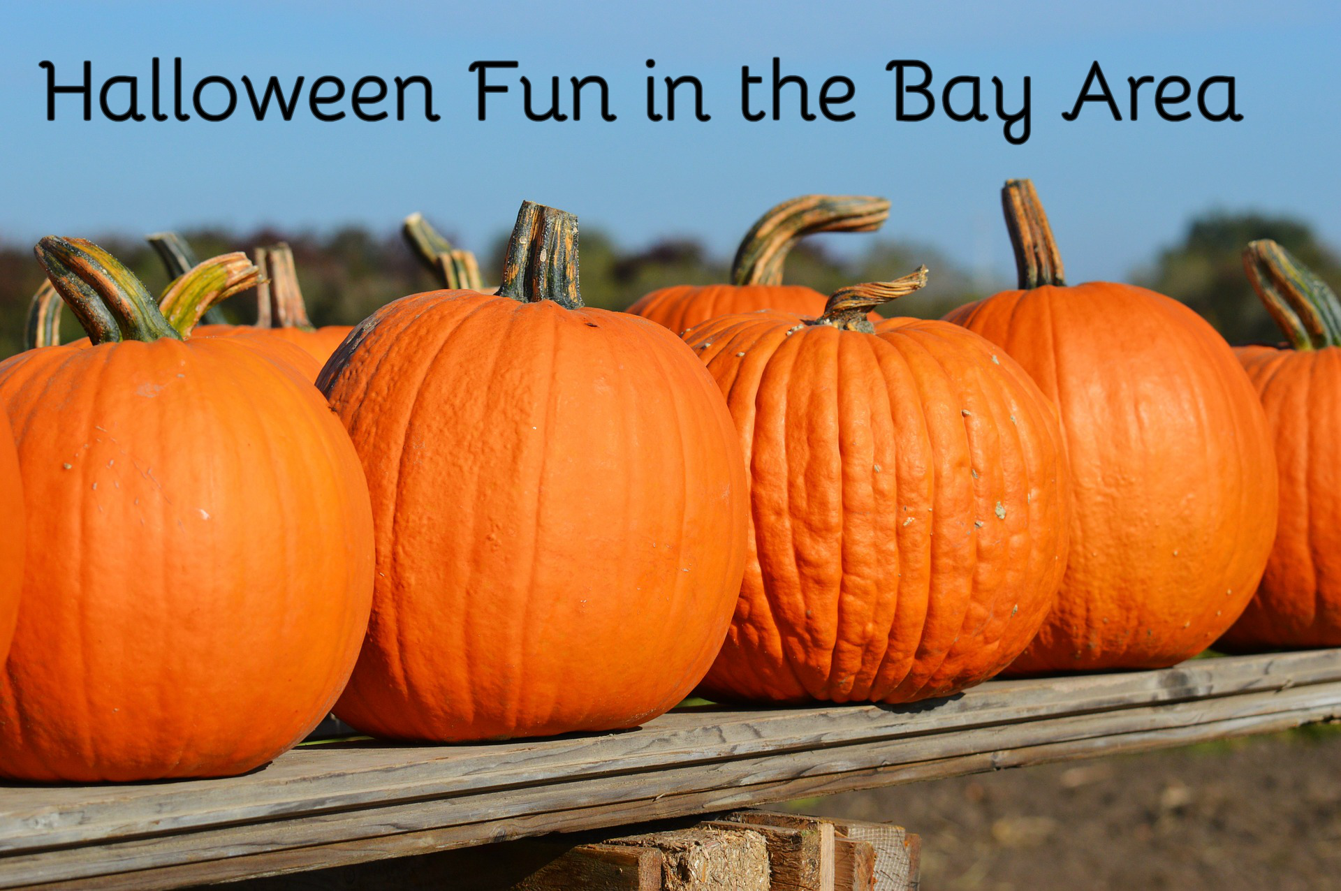Halloween Fun in the Bay Area