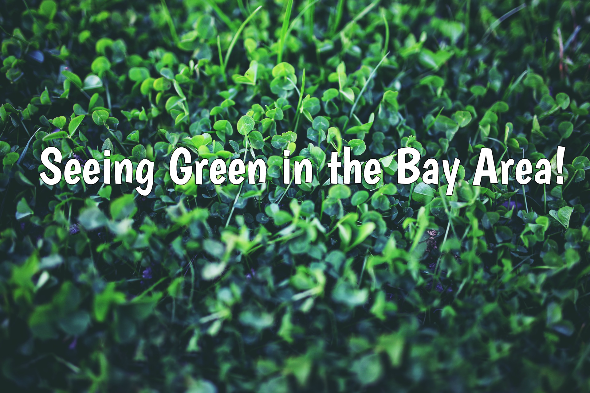 Seeing Green in the Bay Area