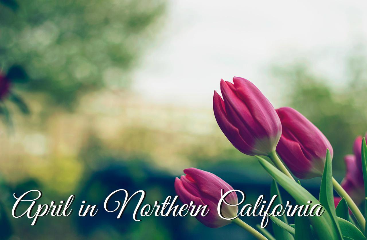 April in Northern California