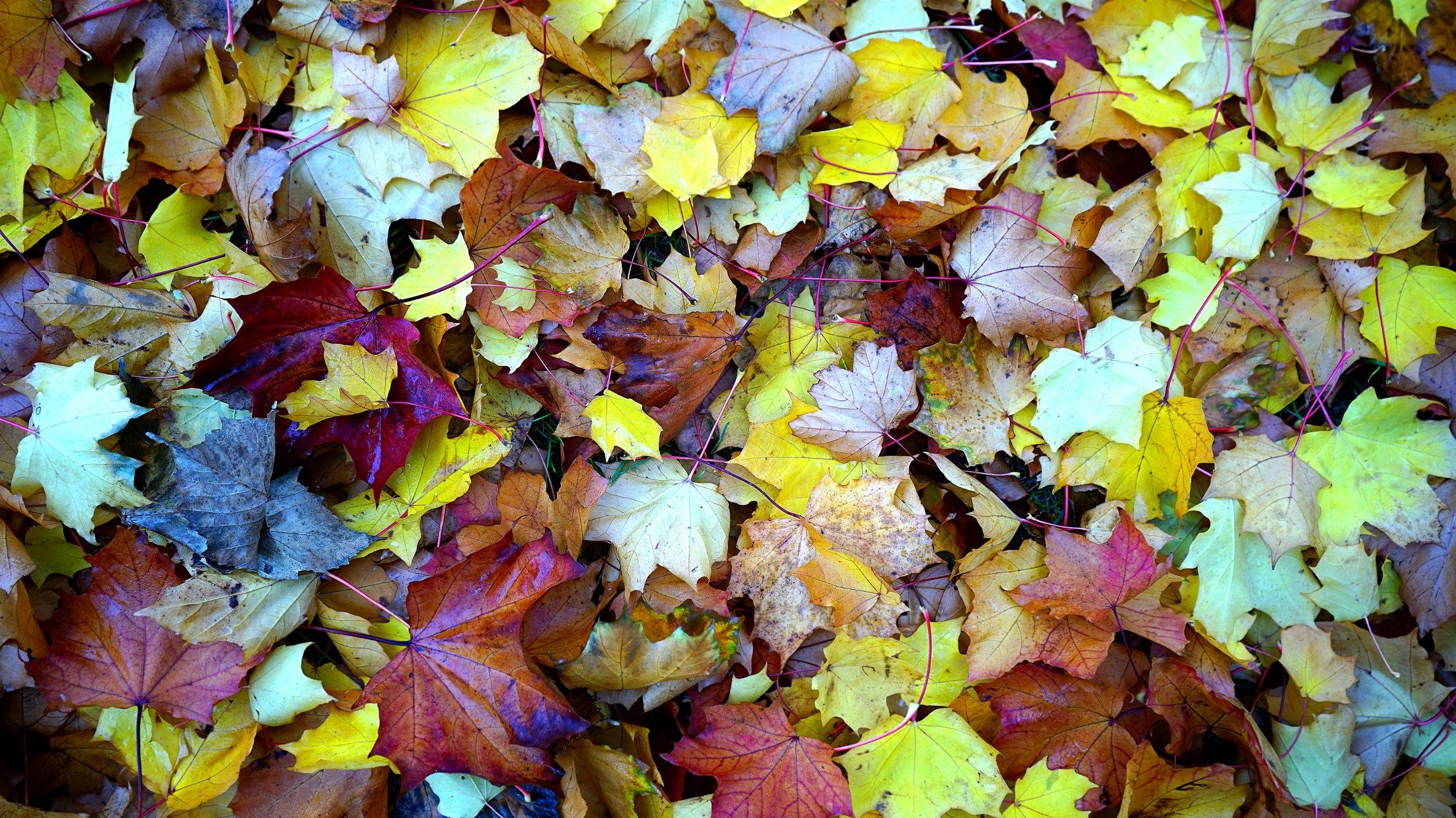Fall Maintenance Tip